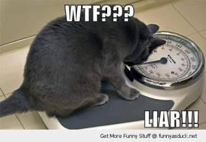wpid-funny-shocked-surprised-cat-scales-weigh-liar-pics.jpg