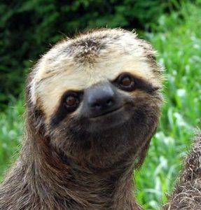 go-on-im-listening-sloth.jpg