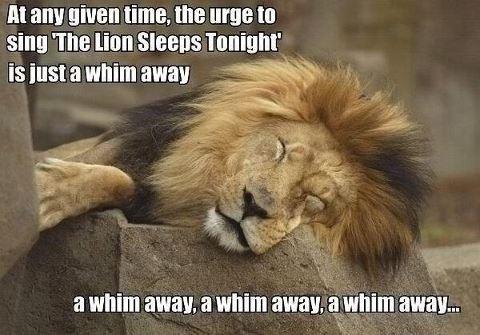lion sleeps tonight